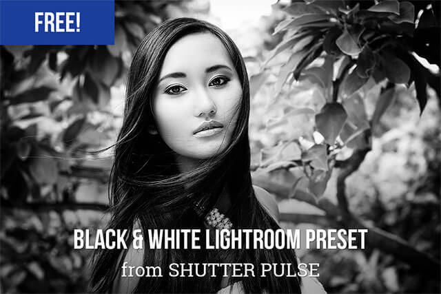 Free Bold Black and White Lightroom Preset