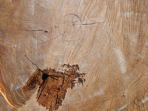 tree-wood-texture-11