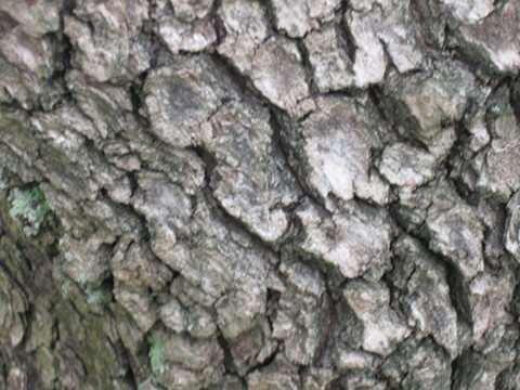 tree-wood-texture-15