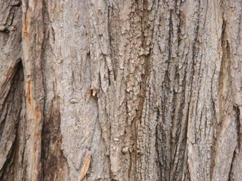 tree-wood-texture-8