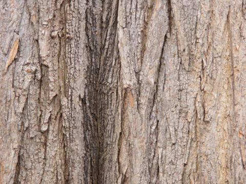 tree-wood-texture-9