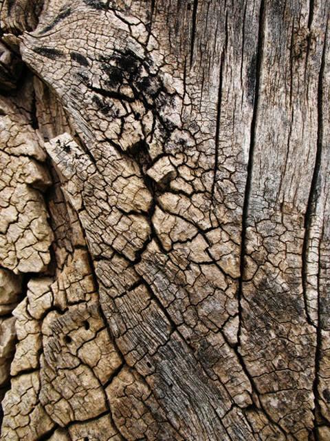 treebark1