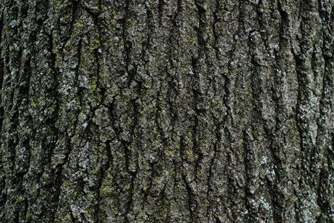 treebark4