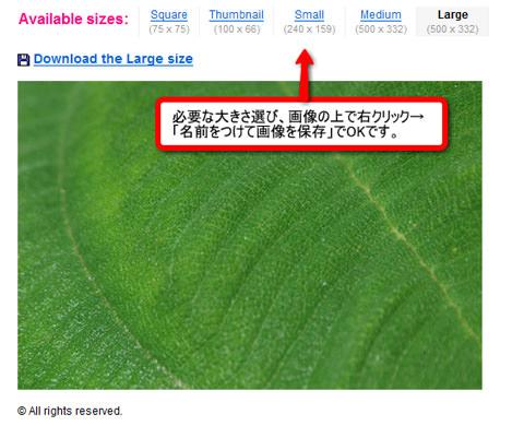 leavesdl2