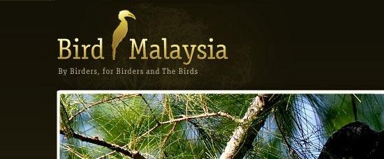 19-21_bird_malaysia