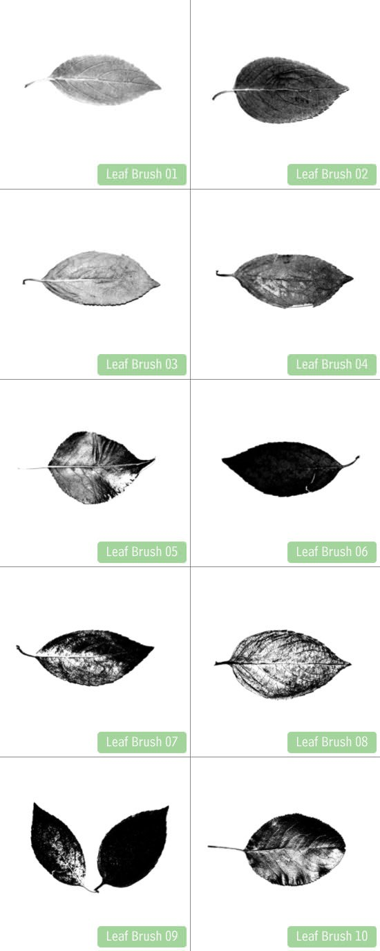 22-02_leaf_brushes_freebie_preview
