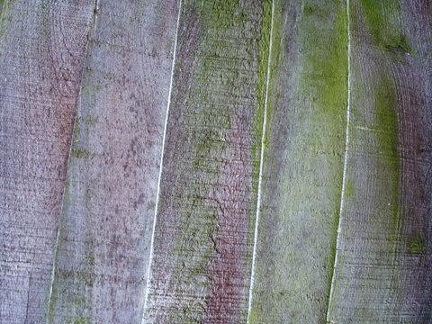 fudgegraphics-wood-panels-071