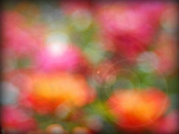 rose-bokeh-texture-with-flare