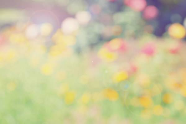 soft-vintage-wildflower-texture