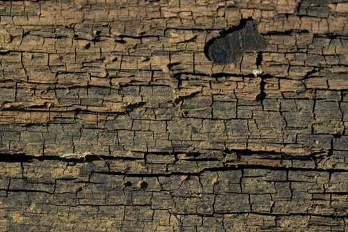 Cracked_Wood_1_by_objekt_stock