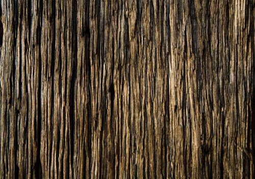 Wood_Texture_by_xNickixstockx