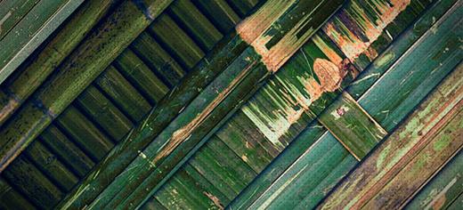 bamboo(2)