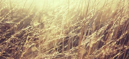lovely-golden-grass