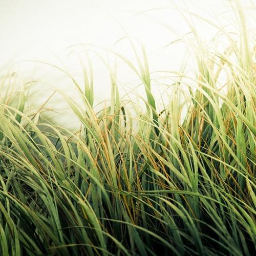 vivid-grass