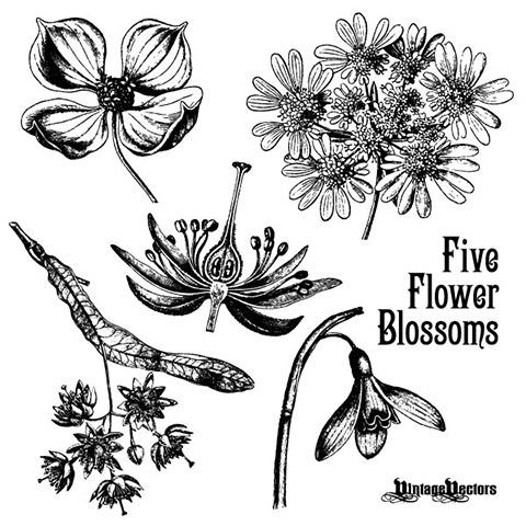 1_floralvecta