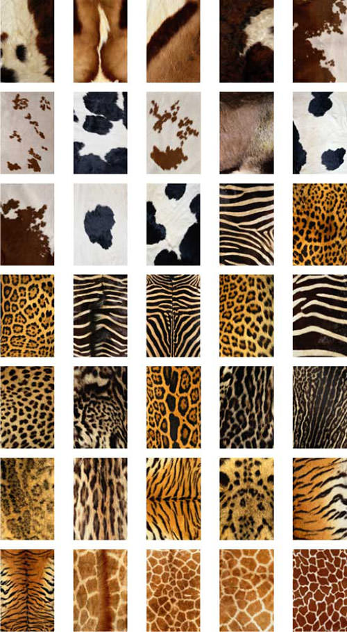 Animal-fur-free-textures-animal-world