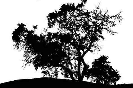 18.leaf-and-tree-vectors