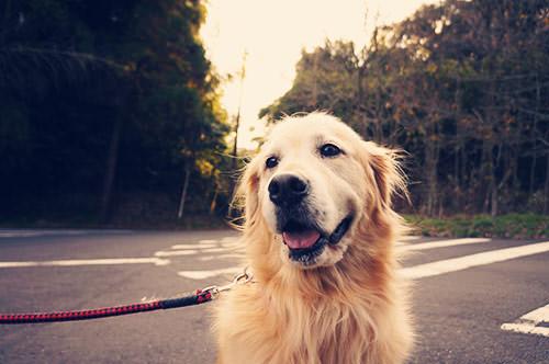 dog_after