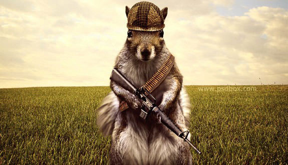 army-squirrel-preview-small-575x330