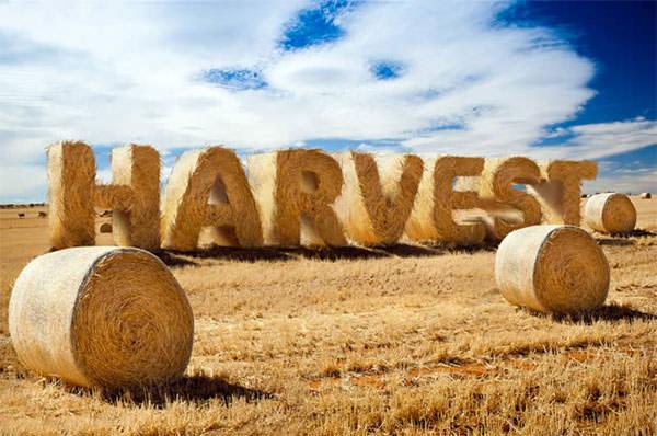 harvest-text