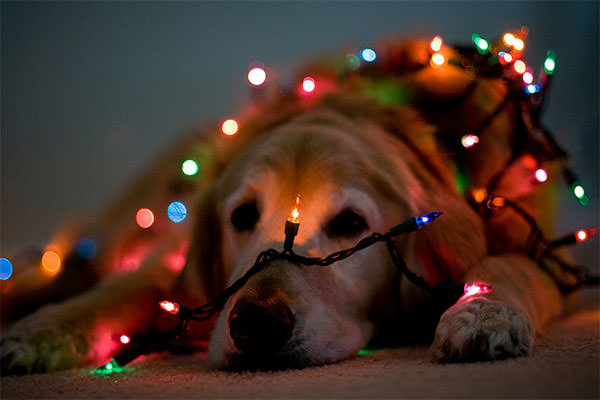 bokeh_christmas5