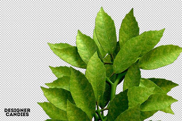 free-foliage-renders