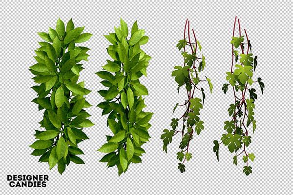 free-leaf-renders-png