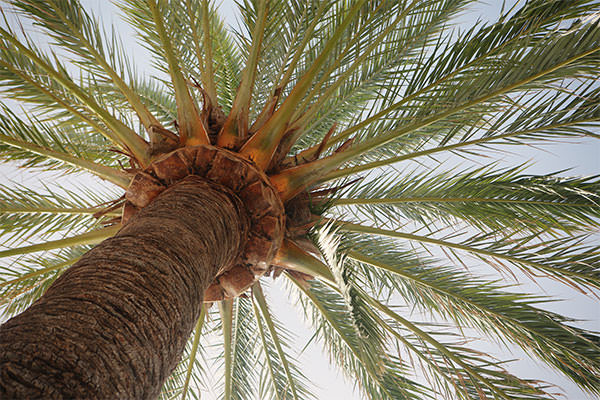 2014_07_life-of-pix-free-stock-photos-spain-madrid-palm-tree-