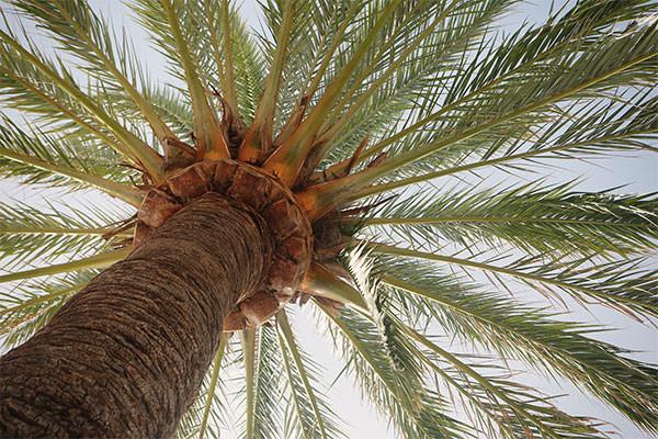 2014_07_life-of-pix-free-stock-photos-spain-madrid-palm-tree-