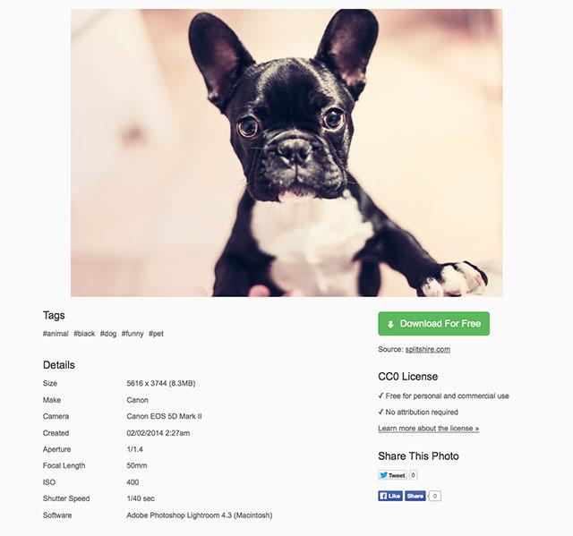 Animal-Black-Dog-Funny-Pet-·-Free-Photo