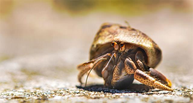 Close-Up-Of-Fuuny-Crab1