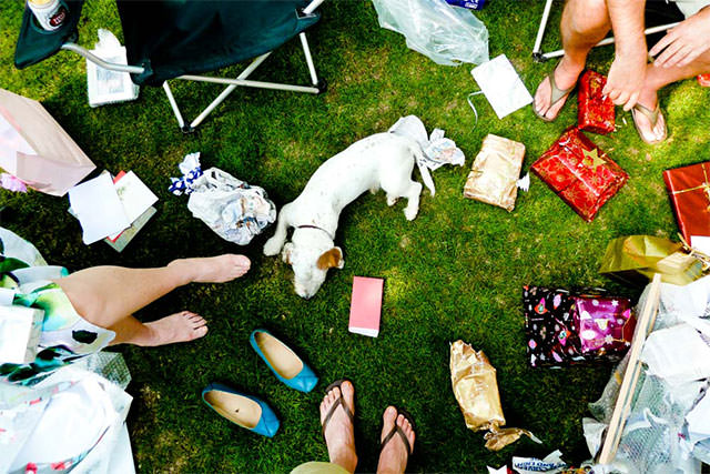Dog-Playing-With-Wrapping-Paper-In-Garden