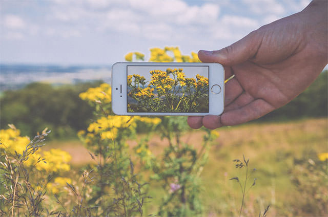 Mans-Hand-Holding-Iphone-In-Front-of-Landscape-With-Flowers