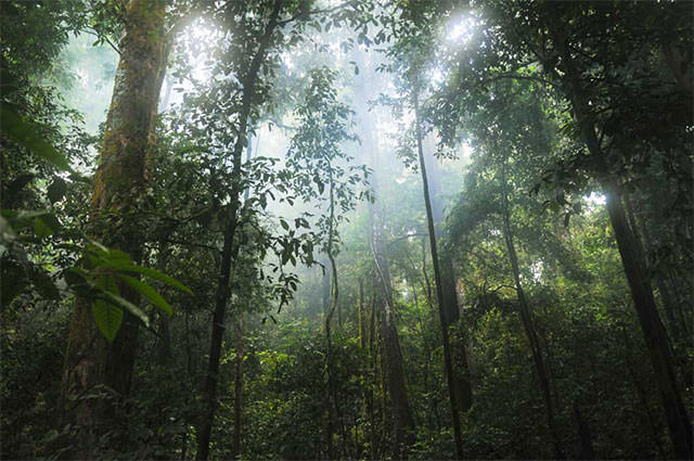 Many-Trees-In-Jungle-With-Sunlight-Shining-Through