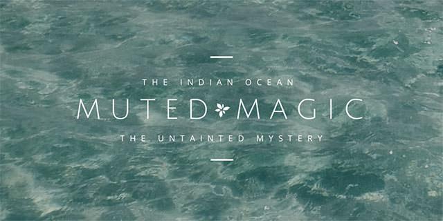 muted-magic-3