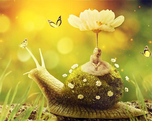 snail40-final