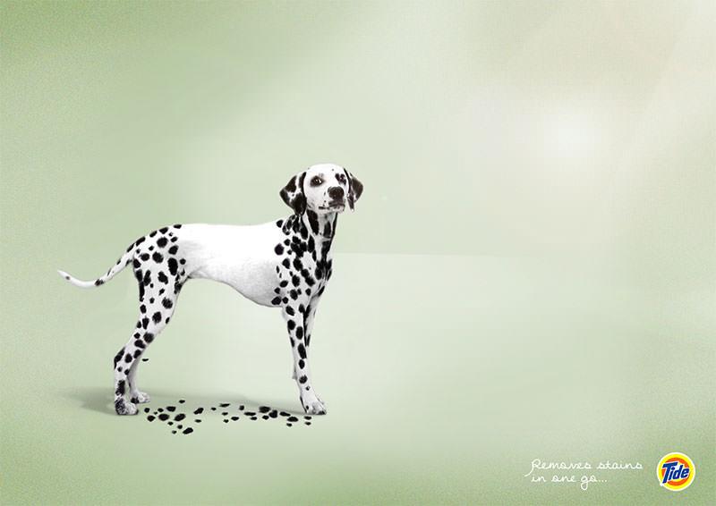 tide-tide-leopard-zebra-dog-print-356668-adeevee