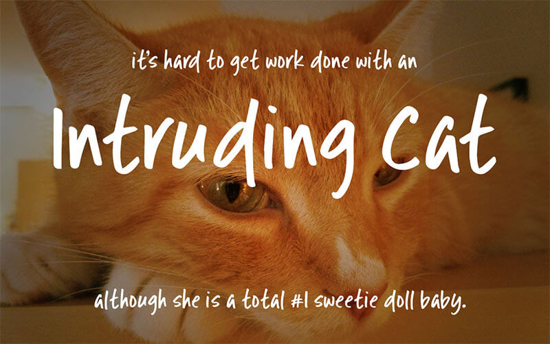 intruding-cat