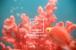 featured_pantone2019
