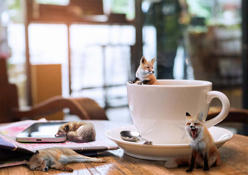 coffee-foxes-final-1