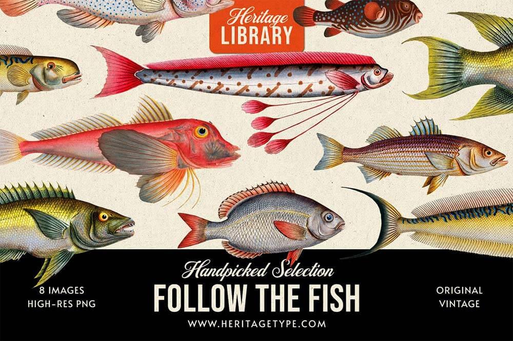 follow-the-fish
