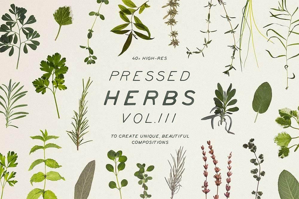 Pressed-Dry-Herbs-Vol-3-1