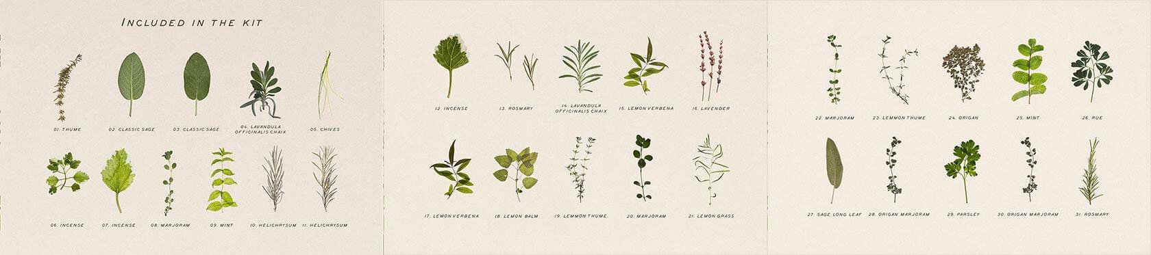 Pressed-Dry-Herbs-Vol-3-2
